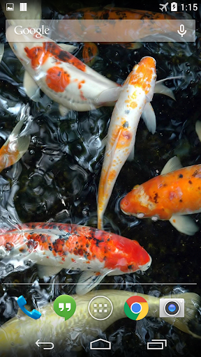 Koi Underwater Live Wallpaper
