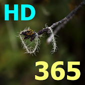 Bibel 365 (Danish) HD