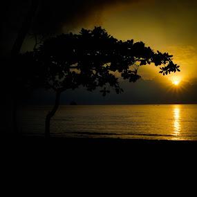 Sunrise Australia by Nicole Mitchell - Landscapes Sunsets & Sunrises ( tree, silhouette, palm cove, australia, beach, sunrise )