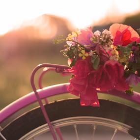 by Alessandra  Romano  - Transportation Bicycles
