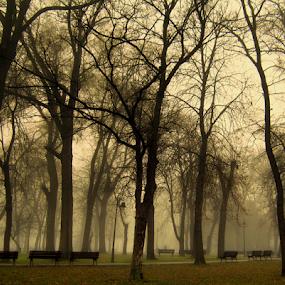 by Tatjana Koljensic - City,  Street & Park  City Parks