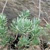 Unknown Plant