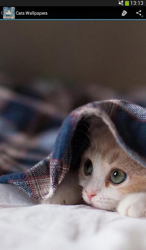 玩免費個人化APP 下載고양이 벽지 app不用錢 硬是要APP