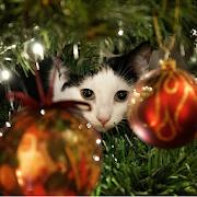 Advent Calendar Christmas Cats icon