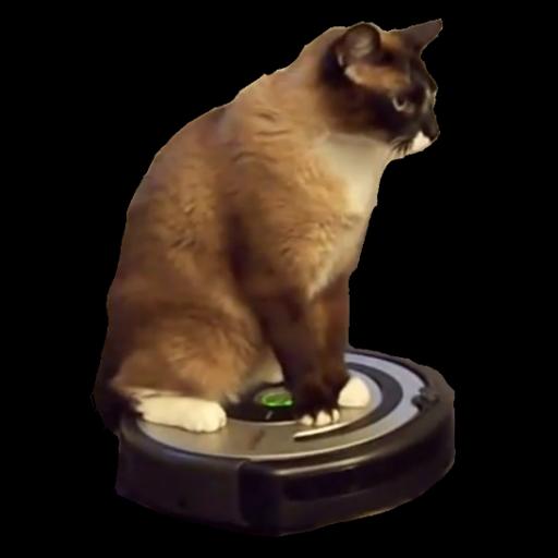 Cleaner Cat Live Wallpaper 個人化 App LOGO-APP試玩