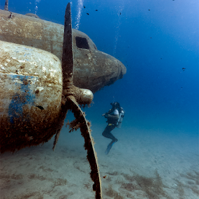 Sunken Dakota Aircraft by Rico Besserdich - Transportation Airplanes ( dakota, plane, underwater, wreck, aircraft, turkey, rico besserdich, diving )