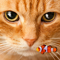 KITTY & FISH LIVE WALLPAPER#12