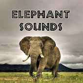 Elephant Sounds