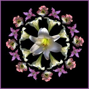 Lilly Mandala by Joseph T Dick - Digital Art Things