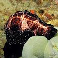 Davao Gulf Marine Life