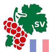 Vinlexikon Frankrike