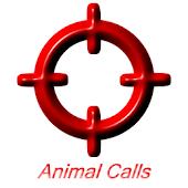 Animal Calls