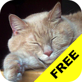 Baby Discover Cats FREE