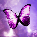 3D Butterfly Live Wallpaper HD icon