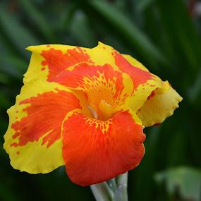 Alone by Arcelous Lu - Flowers Single Flower (  )
