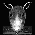 A Rat Named Bove logo