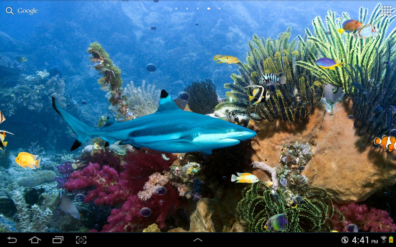 Live fish wallpapers 2017 2018 best cars reviews for Live fish wallpaper