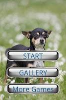 Screenshot of Dog Puzzle: Chihuahua