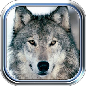 Wolves Valley for PC and MAC