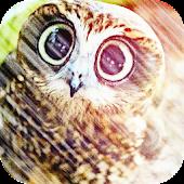 Wild Flying birds HD