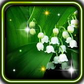 Springs Lilies Flowers