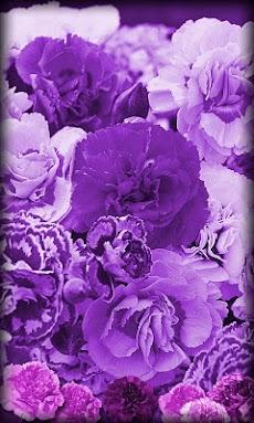 紫色の花の壁紙を生きる Androidアプリ Applion