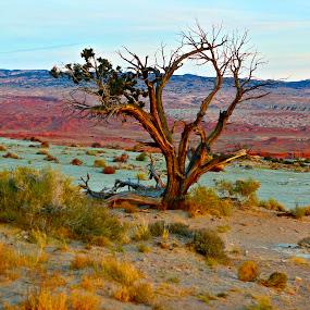 by Ashley Gibson - Landscapes Deserts ( golden hour, sunset, sunrise, Earth, Light, Landscapes, Views )