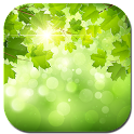 Summer nature icon