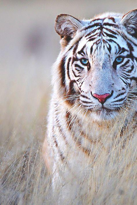 Animal Wild Wallpaper HD - Android Apps on Google Play
