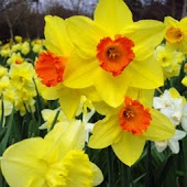 Spring Flower Puzzles