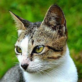 candid cat by Shohibul Huda - Animals - Cats Portraits ( cat, candid, photography, portrait, animal,  )