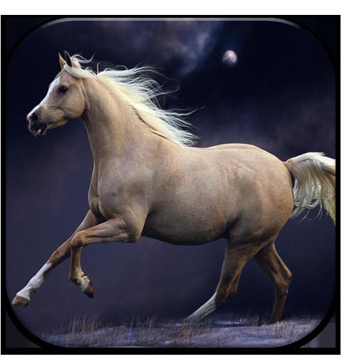 Horse Wallpapers app LOGO-APP點子