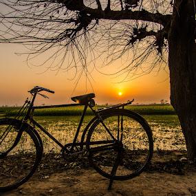 Pedal Power by Avanish Dureha - Transportation Bicycles ( rural india, incredible_india, punjab, sunset, dureha@gmail.com, avanish dureha, bicycle )