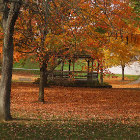 Fall in the park by Anne Mangen - Nature Up Close Trees & Bushes ( fall leaves on ground, fall leaves, fall colors, fall,  )