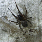 Orange-legged spider