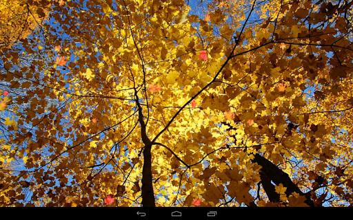 Autumn Wallpaper screenshots 9