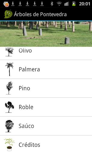 Trees of Ponteveda