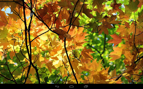 Autumn Wallpaper screenshot 7