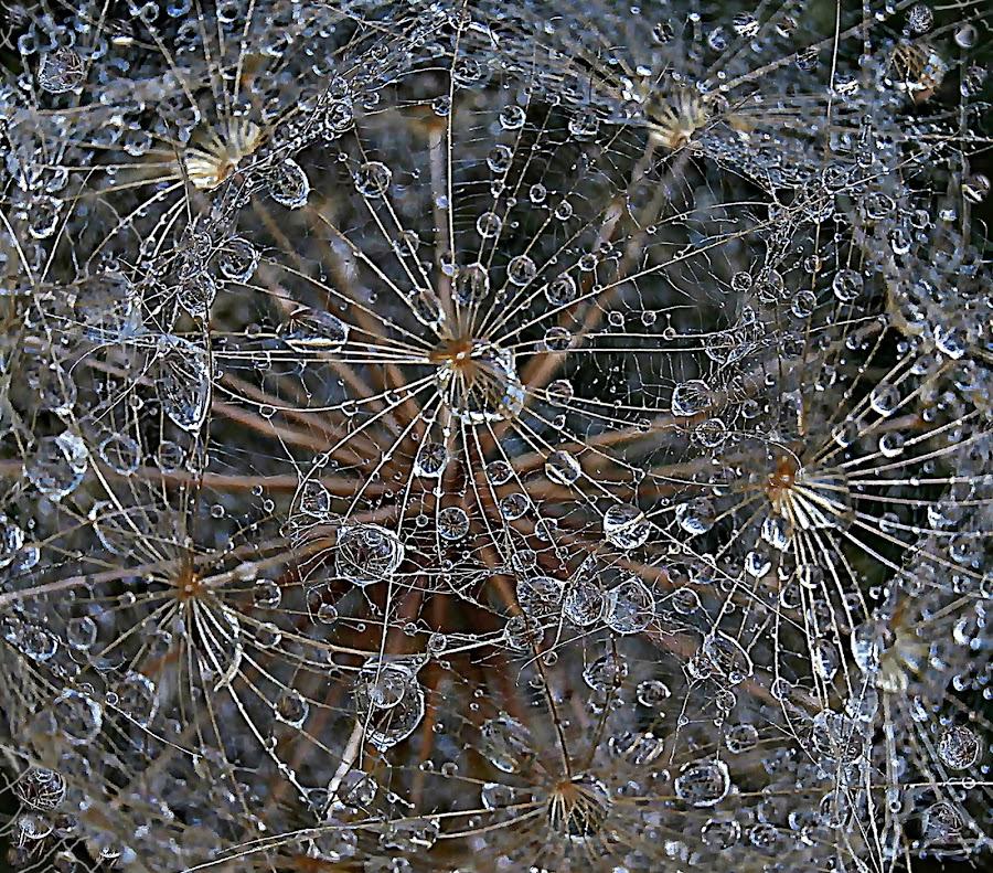 Crystal Net Over the Heart by Marija Jilek - Nature Up Close Other plants ( nature, blue, silver, goat-beard, white, plants, crystal, net, black, golden )