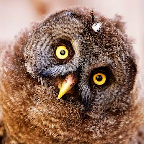MOCHO by JORGE JACINTO - Animals Birds ( bird, animals,  )