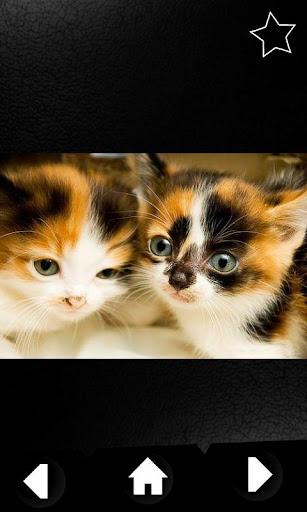 【免費媒體與影片App】The Cute Kittens Database-APP點子