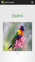 Screenshot of Bird Sounds