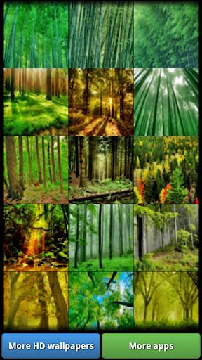 樹木和森林壁紙