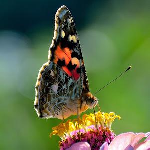 Butterfly2_2950.JPG
