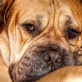by Eddie Leach - Animals - Dogs Portraits (  )
