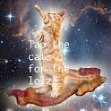 CatOverflow icon