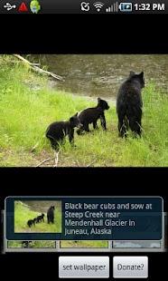 Alaska Critters Free screenshot