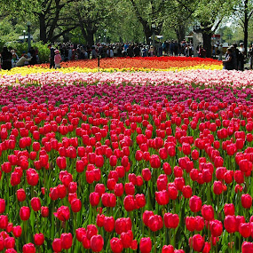Festival of Tulips by Wayne Paton - People Street & Candids ( crowds, gardens, festival, tulips, peole, people, crowd, humanity, society )