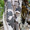 Black Fungal Mat