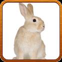 Cute Animal Ringtone icon